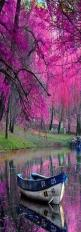 reflections: Picture, Color, Beautiful, Trees, Pink, Place, Photo