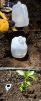 The best way to water your garden is to set up a drip irrigation system with an automatic timer. But what if you do not have that option?. If so, a great option is to bury a milk jug with holes drilled in it next to your plants. To water all you have to d