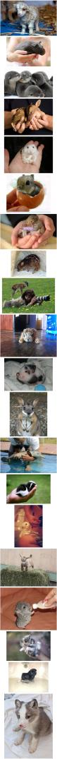 This much cuteness in one pin should be illegal!: Cuteness Overload, Cute Baby Animals, Adorable Animals, Adorable Babies, Cutest Animals, Animalss, Animal Babies, Animals 3