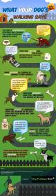 We thought this infographic was really interesting! Had you ever wondered what your dog might be trying to tell you while you are out on your walks? Now you can know!: Dog Walking, Dog Training, Dogs Pets, 3D Animal, Animal Face, Dog Stuff, Dog S Walking