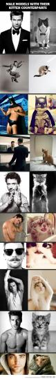 Why is everything better with cats??: Cats, Kitten Counterparts, Giggle, Kitteh, Kittens Win, So Funny, Male Models, Animal