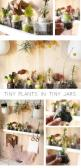 15 Fabulous Indoor Garden Ideas - tiny plants in tiny jars: Tinyplants, Green Thumb, Idea, Tiny Plants, Tiny Garden, Mini Garden, Indoor Garden, Tinyjars