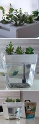 A self cleaning + self feeding fish tank! #product_design: Idea, Fish Tanks, Pet, Fishtanks, Aquarium, Farm Self Cleaning, Self Cleaning Fish, Aqua Farm