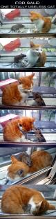 ADORABLE!!!: Useless Cat, Cats, Animals, Totally Useless, Pet, Funny, Crazy Cat, Kitty, Friend
