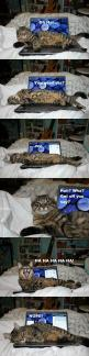 And nothing involving the internet was done that night.  Because obviously, the cat wins.  Always.: Funny Animals, Kitty Cats, Time, Funny Cats, Funny Stuff