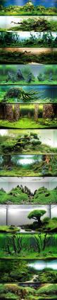 Aquariums...I am a huge fan of wasting money, power, time and water. Great way to relax.: Aquascaping Aquarium, Fish Aquarium, Fishtank, Fish Tank Idea, Aquarium Idea, Nature Aquarium