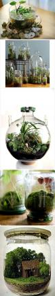 Bottle terrariums - cool :): Water Gardens, Garden Terrarium, Bottle Terrariums, Terrarium Ideas, Glass Garden, Crafty Find, Indoor Plants