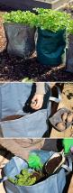 Grow potatoes in bags.  I saw this in gardners supply magazine...: Garden Ideas, Potatoes Garden, Gardening Ideas, Seed Potatoes, Grow Bag Gardening, Gardening Gardens, Growing Potatoes In A Bag, Bags, Grow Potatoes