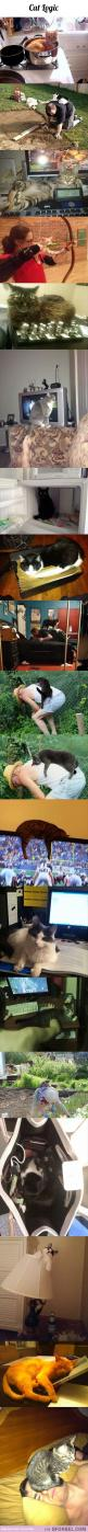 It's funny how cats choose the time when you are doing something really important to lay on you.: Kitty Cat, Cat Logic, Funny Cats, Crazy Cat, Funny Animal, Cat Lady