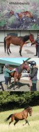 Little Survivor Finds A Home: Beautiful Horses, Help Animals, Humanity Restored, Horse Deserves, Faith In Humanity, Survivor Finds, People Saving Animal, Amazing Animals, Beautiful Things