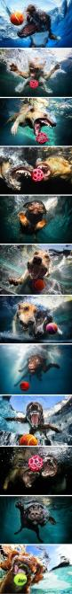 Seth Casteel's photos of dogs diving into swimming pools in hot pursuit of neon tennis balls.: Funny Animals, Funny Dogs In Water, Pet, Funny Picture, Underwater Dogs, Dogs Underwater Funny