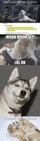 The return of Moon Moon…: Moonmoon, Derp Husky, Dammit Moon Moon Funny, Funny Com, Funny Marvel Random Disney, I M Scarlet, Cried Laughing, Dying Laughing, Funny Sh T