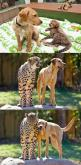 Who said we can't all just get along?: Animal Friendship, Cheetah, Animals, Best Friends, Bff, Dog, Cutest Animal, Adorable Animal