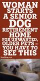 Woman Starts A Senior Dog Retirement Home For Unwanted Older Pets... You HAVE To See This! <3: Dog Retirement, Older Pets, Pets Dogs, Senior Pet, Unwanted Older, Senior Dog