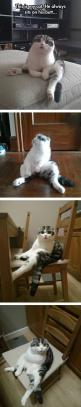 A cat always sits on his butt.: Funny Animals, Kitty Cat, Giggle, Funny Cats, Scottish Fold Cat, Weird Cats, So Funny