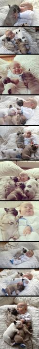 adorable: Cuteness Overload, French Bulldogs, My Heart, Puppy, Baby, Animal