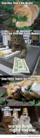 bad cats: Cats, Animals, Catnip, Stuff, Funny, Funnies, Cat Nip, Kitty