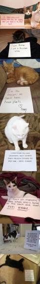 Cats Are Funny: Lolcats Loldogs, Animals སེམས ཅན, Amusing Animals, Cutieees Funny Animals, Funny Cats, Funnies, Things Cats, Animals Moo, Cats Funny
