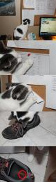 Definitive Proof that Your Cat is Out to Get You: Evil Cats, Animals, Funny Stuff, Funnies, Humor, Funny Animal, Kitty