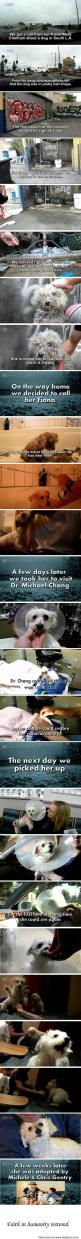 Dog Rescue - Happy Ending <3  Video of the rescue!: Sweet, Dogs, Heart Warming, Faith In Humanity Restored, Happy Endings, Animal