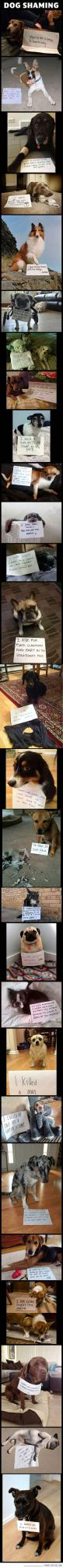 "Dog shaming is hilarious"": Shaming Compilation, Dog Shame, Funny Dogs, Dog Shaming, Funny Stuff, Puppy, So Funny"