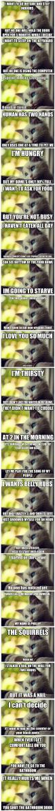 First world cat problems.: Catproblems, Kitty Cat, Kitten, Funny Cats, Cat Problems, First World Cat, Crazy Cat, Funny Animal