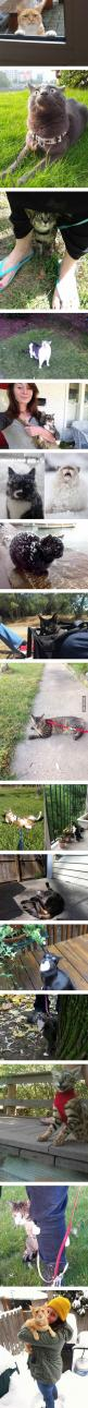 Indoor cats go outside for the first time.: Funny Animals, Animal Kingdom, First Time, Funny Cats, Cats Reactions, Animals Other, Funnies, Cats Going, Indoor Cats