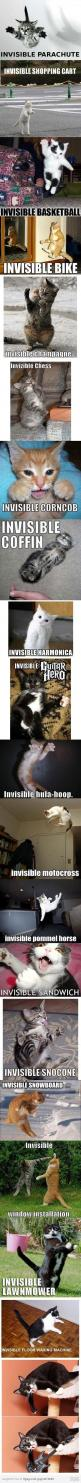 Invisible cat: Animals, Kitty Cat, Funny Cats, Crazy Cat, Funny Stuff, Invisible Things, So Funny