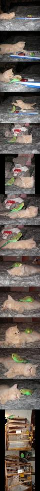 Just good friends in the end.: Cats, Animals, Kitten, Friends, Stuff, Pet, Funny