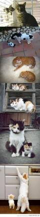 look alikes! too cute: Cats, Kitten, Mini Me, Crazy Cat, Baby, Kitty, Animal