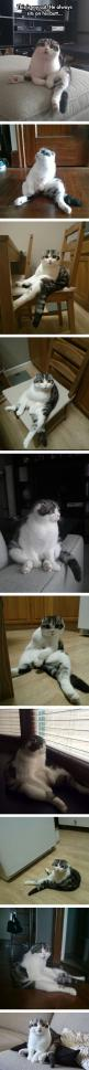 Omg this is hilarious: Animals, Funny Cat, Butt Sitting, Weird Cats, Cat Sit, Cat Lady