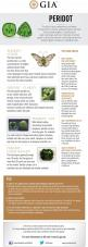 Peridot Buying Guide.: Gemstones Birthstones, Gia S, Gia Guides, Gia 080114, Birthstones Peridot, Buying Guide, August Birthstone, Peridot Buying