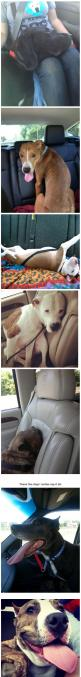 Photos of dogs taken after leaving the shelter and getting in the car…: Animal Rescue, Pictures Of Dogs, Dog Car Seat, Animal Shelter