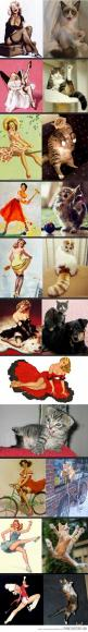 Pin-up cats, IM DYING: Giggle, Funny Cat, Pin Up Cats, Sexy Cat, Pinup Cats, Funnies, Cat Lady, Animal