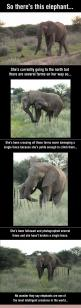"Polite elephants-- so much for African elephants being ""more aggressive"" lol: Gentle Giant, Animals, Sweet, Elephants ️, Considerate Elephant, Favorite Animal, Polite Elephant, Intelligent Creatures, Elephants 3"
