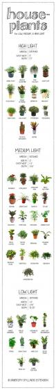 So useful right now: a visual guide to houseplants, according to their need for light.: Green Thumb, Indoor Flower, Low Light Houseplant, Low Light Plant, Indoor Garden, Indoor House Plant, Low Light House Plant, Low Light Indoor Plant
