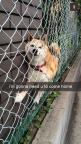 26 Snapchats From Your Dog lol omgeee this would be my dog: Giggle, Funny Snapchat, Poor Dog, 26 Snapchats, So Funny, Dog Snapchat, Animal