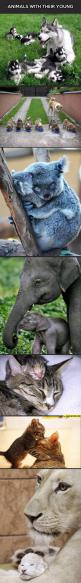 Animals with their babies: Adorable Animals, Koala, Animals ️, Awwww Animals, Cute Animals, Baby Animals And Their Mothers, Animal Babies, Mom