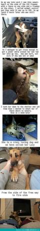 Awesome: Animals, Sweet, Dogs, Pet, Faith In Humanity Restored, Awesome Story, Things, Beautiful Stories, Happy Endings
