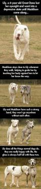 Heartwarming story of a great dane and a friend.: Great Danes, Dogs, Heart Warming, My Heart, Friend, Animal