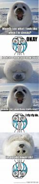 hehehehe so cute!!!!!: Seals, Animals, Stuff, Funny, Things, Honkshoo Honkshoo, Baby Seal