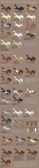 Horse Colour Chart vs 2 by Gaurdianax on deviantART: Horses Colors, Horse Colors Chart, Colour Chart, Horse Color Chart, Horse Colour, Color Charts, Horse Breed Chart, Horse Breeds Chart