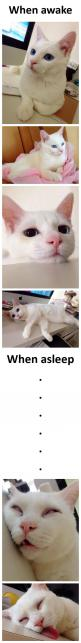 I die!!: Cats Cats, Kitty Cats, Beautiful Cats, Funny Cat, Crazy Cat, Gorgeous Cat, Cat Sleeping, Cat Lady