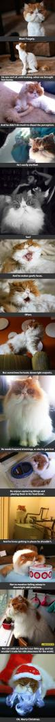 I laughed a little too hard at this: Kitty Cats, Awkwardly Awesome, Funny Cats, Cats Stuff, Persian Cat, Pets Cat, Animal
