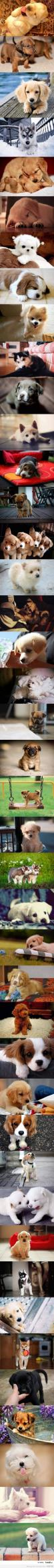 Puppies!! They are so cute!: Doggie, Cuteness Overload, Cute Puppies, Animals, Pet, Puppys, Puppies 3