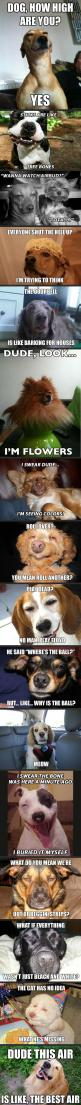 quite disturbing and somewhat funny #dogs #humor: Animals, Stoned Dogs, Funny Dogs, Stoner Dog, High Dogs, Funny Stuff, Funnies, So Funny