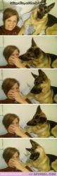 So funny!.: Selfie, Giggle, German Shepherds, Funny Animal, Dog Fart, German Shepard, Dogs Face