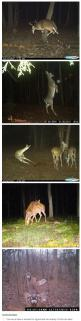 What even are deer: Trail Camera, Giggle, Animals, Funny Deer Pictures, Cam Deer, Funny Hunting Pictures, Deer Camera Pictures