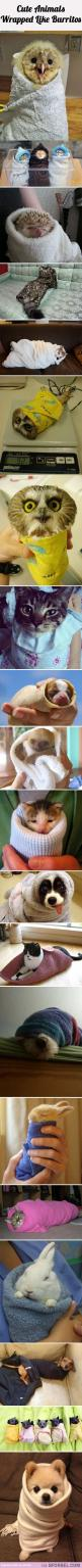 20 Animals Wrapped Like Burritos…: Animal Burritos, Adorable Animals, Animals Wrapped, Funny, Baby Animals, 20 Animals, Smile