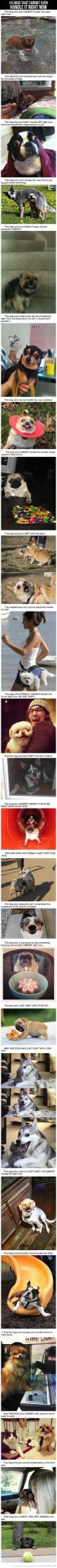 24 Dogs That Cannot Handle It Right Now...and neither can I. lol: Laughing So Hard, Giggle, Cant Handle, So Funny, Animal